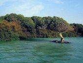 حملة لإنقاذ شجر المانجروف حفاظا على البيئة.. اعرف التفاصيل