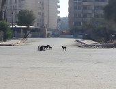 صور.. قارئ يشكو من الكلاب الضالة فى شارع إسماعيل وهبى بمدينة نصر