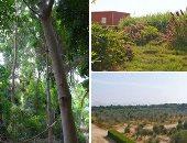 تقرير: غابات أمريكا اللاتينية أساسية لاستدامة البيئة والأمن الغذائى فى العالم