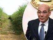 """لأول مرة.. 4 أصناف جديدة لقصب السكر تزيد الإنتاج 15% وتوفر 20% من المياه.. """"الزراعة"""" تشجع الفلاحين على زراعتها بصرف التقاوى بالتقسيط ومنحهم 5 آلاف جنيه دعما أثناء توريد المحصول.. وتؤكد: تعميمها خلال 3 سنوات"""