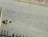 حيوان نافق فى النيل بزفتى.. ورئيس المدينة: حملات نظافة يوميا على جانبى النهر