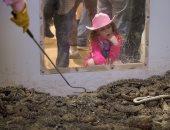 """صور.. جولة داخل مزارع """"أفعى الجرس"""" بالولايات المتحدة"""