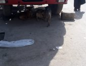 صور.. الكلاب الضالة تزعج سكان شارع عين شمس ومطالب بإنهاء ظاهرة انتشارها