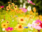 ماذا يعنى الاعتدال الربيعى؟..المعهد القومى للبحوث الفلكية يرد × 7 معلومات