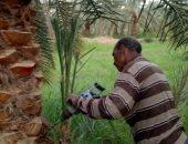 """""""الزراعة"""" تكثف المرور الميدانى على الزراعات الشتوية بالجيزة والفيوم"""