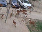 انتشار الكلاب الضالة بمنطقة عمارات البنفسج فى القاهرة الجديدة