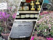 """فيديو وصور..العلاج بالنباتات والعسل بمعرض زهور الربيع بحديقة الأورمان.. عسل للشفاء من الضعف الجنسى والعقم.. و""""حشيشة الليمون"""" تقاوم التهاب المفاصل.. و""""نعناع الحبق"""" للانتفاخ..ونبات """"الست المستحية"""" خطر على الأطفال"""