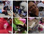 """بدل وأعلام وفساتين.. كلاب نيكاراجوا تتزين لقداس """"الوقاية من الأمراض"""""""