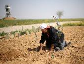 صور.. فلسطينيون يزرعون الزيتون بأراضى غزة مع اقتراب ذكرى يوم الأرض
