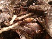 مصدر أمنى: الحمير المذبوحة بكرداسة لإطعام الحيوانات بالسيرك القومى
