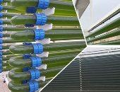 """صور.. """"القومى للبحوث"""" ينجح فى إقامة مفاعل لإنتاج الوقود من الطحالب لأول مرة فى الشرق الأوسط.. رئيس الفريق لـ""""اليوم السابع"""": تكلفته 11 مليون جنيه.. ويؤكد: استخدمنا الطحالب فى إنتاج أدوية للسكر وألزهايمر"""