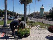 صور.. الإسكندرية تستعد للمعرض السنوى لزهور الربيع بميدان الإسكندر الأكبر