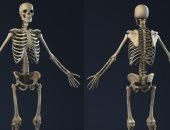 كم عدد عظام الهيكل العظمى للإنسان.. وما وظائفها؟