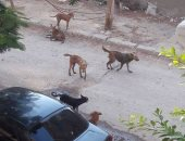 قارئ يشكو انتشار اكلاب الضالة بالحى الثالث بمدينة السادس من اكتوبر