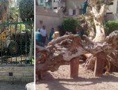 الآثار: محافظة القاهرة أوقفت أعمال إقامة ملاهى أطفال أمام شجرة مريم