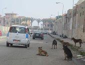 قارئ يشكو من انتشار ظاهرة الكلاب الضالة بشارع طومان باى فى حلمية الزيتون