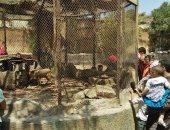 حديقة الحيوان: نتوقع وصول عدد الزوار بنهاية اليوم لـ60 ألفًا