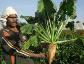 فيديو وصور.. جامعة أسيوط تنجح فى إنتاج تقاوى بنجر السكر محليا