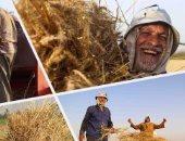 """""""التموين"""" تبدأ اليوم استلام القمح المحلى من المزارعين بسعر 600 جنيه للأردب"""