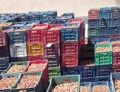 صور.. تمور الوادى الجديد تتصدر الأسواق المحلية بإنتاج 40 ألف طن