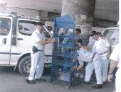أمن الجيزة يشن حملات لتنفيذ 129حكما قضائيا وضبط 81 قضية مخدرات وسلاح نارى