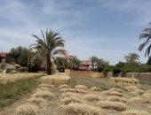 """وكيل وزارة الزراعة بالمنيا لـ""""اليوم السابع"""" نستهدف استلام 500 ألف طن قمح"""