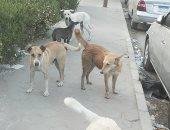 صور.. شكوى من انتشار الكلاب الضالة فى زهراء مدينة نصر