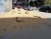 الكلاب الضالة تزعج سكان شارع عبد العزيز عيسى فى مدينة نصر