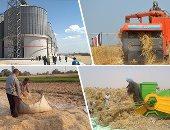 الزراعة تستعد لحصاد 4000 فدان قمح وبنجر سكر بمشروع غرب المنيا