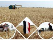 ارتفاع المساحات المنزرعة بالقمح والفول البلدى لـ3 ملايين و104 آلاف فدان
