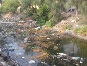 فيديو وصور.. مياه الصرف تتلف المحاصيل لزيادة ملوحتها بأراضى كفر الشيخ