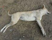 صور.. قارئة تعلن استياءها لتسمم الكلاب وقتلها بمادة محرمة فى مدينة نصر