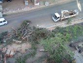 صور.. مذبحة أشجار فى شارع المريوطية فيصل وقارئ يناشد محافظ الجيزة