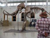 بعد عرض هيكل عظمى لحيوان الماموث بالمكسيك..شاهد أشهر الحيوانات المنقرضة بالمتاحف