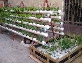 صور .. تعرف على كيفية تنفيذ تجربة الزراعة بدون تربة على أسطح المنازل