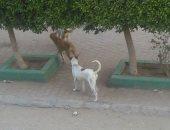 شكوى من انتشار الكلاب الضالة بشارع السد العالى فى المعادى