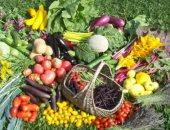 """تقرير: الزراعة أكبر القطاعات استيعابا للأيدى العاملة وترتيب """"التعليم"""" مفاجأة"""