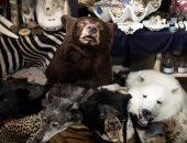 CNN : مليون نوع من الكائنات على الأرض مهدد بالانقراض بسبب البشر