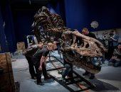 صور.. عرض هيكل ديناصور مكتمل فى متحف بفرنسا عمره 67 مليون سنة