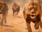 ألمانيا: العثور على حيوانات مفترسة فرت من حديقة حيوان