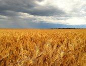 تعرف على 5 سلع انخفض حجم استيرادها خلال مايو.. أبرزها القمح