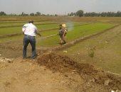 النائب عصام الصافى يطالب باستراتيجية لزراعة الأرز تعتمد على طبيعة التربة