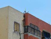 إعدام كلب.. مواطن يشنق كلبه أعلى منزله فى بورسعيد
