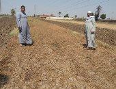 نقص المياه يهدد زراعات الكوامل بحرى بسوهاج.. والرى: جار ملء الترع