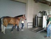 """""""الزراعة"""" اعداد دفعة جديدة من الخيول  لتصديرها ومباحثات لفتح أسواق جديد"""
