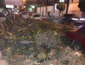 صور.. شكوى من قطع الأشجار فى شارع المعسكر الرومانى بالإسكندرية