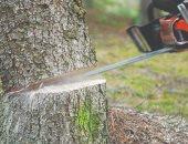 ما ذنب النباتات.. لص ألمانى يقطع شجرة بالمنشار لسرقة دراجة