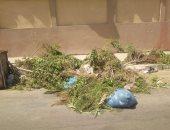 صور.. شكوى من قطع الأشجار فى شوارع التجمع الأول بالقاهرة الجديدة