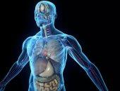 اعرف جسمك.. ما هى أعضاء الجسد التى لا يصل إليها الدم؟