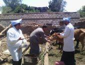 الزراعة: مد أعمال تحصين الأبقار للجلد العقدى والجدرى حتى نهاية أبريل